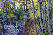 Aspen Fall Colors Photos - Fall Creek by Scott McGuire