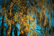 Tammy Chesney - Fall Cypress