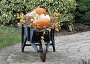 Bittersweet Framed Prints - Fall Decorated Wheelbarrow  Framed Print by Janice Drew