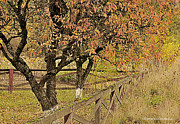 Fall Photographs Prints - Fall Fenced Print by Tonia Noelle