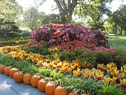 Fall Photos Originals - Fall Festival at Dallas Arboretum  by Ruth  Housley