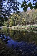 Adrienne Lattuca - Fall Foliage