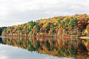 Walden Pond Photo Posters - Fall Foliage at Walden Pond Poster by John Sarnie