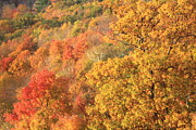 Autumn Foliage Photos - Fall Foliage Berkshires by John Burk