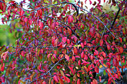 Fall Foliage Colors 05 Print by Metro DC Photography