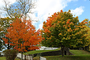 Orange Photos - Fall Foliage Colors 09 by Metro DC Photography