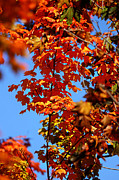Fall Photo Prints - Fall Foliage Colors 15 Print by Metro DC Photography