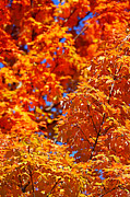 Fall Photo Metal Prints - Fall Foliage Colors 17 Metal Print by Metro DC Photography