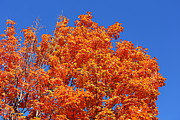 Fall Foliage Colors 19 Print by Metro DC Photography