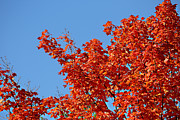 Foliage Posters - Fall Foliage Colors 20 Poster by Metro DC Photography