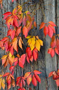 Corinne Rhode - Fall Foliage