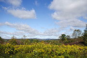 Fall Foliage Digital Art - Fall Foliage Hilltop Landscape by Christina Rollo