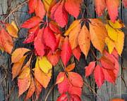 Corinne Rhode - Fall Foliage II