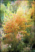 Fall Foliage Digital Art - Fall Foliage by Lynn Andrews
