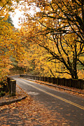Cari Gesch Posters - Fall Foliage on the Highway Poster by Cari Gesch