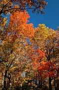 Patrick Shupert Metal Prints - Fall Foliage Metal Print by Patrick Shupert
