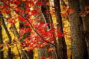 Fall Forest Detail Print by Elena Elisseeva