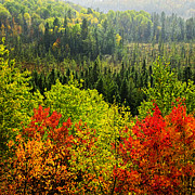 Vista Photo Posters - Fall forest rain storm Poster by Elena Elisseeva