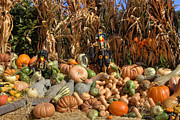 Autumn Farm Scenes Posters - Fall Harvest Poster by Joann Vitali