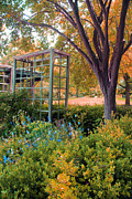 Carolyn Stagger Cokley - Fall Herb Garden0981