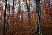 Jeka World Photography - Fall Hollow