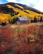 White River Prints - Fall in Ashcroft Print by Ray Mathis