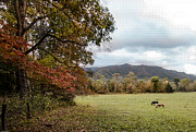 Debbie Karnes - Fall in Cades Cove