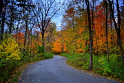 Indiana Autumn Posters - Fall in Cool Creek Park Indiana Poster by Amy Lucid