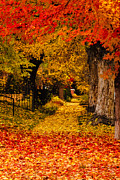 Fallen Leaf Photo Originals - Fall in the City by Teri Virbickis