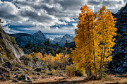 Orange Sky Framed Prints - Fall in the Eastern Sierra Framed Print by Cat Connor