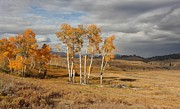 Autumn Landscape Pyrography Prints - Fall in Yellowstone Print by Daniel Behm