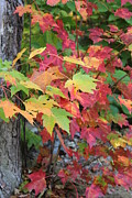 Jeffrey  Akerson - Fall is here