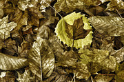 Piles Of Leaves Posters - Fall leaf clutter Poster by Tony Moran