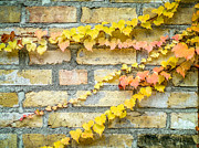 Toni Thomas - Fall Leave on a Brick...
