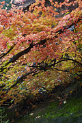 Oak Creek Canyon Prints - Fall Leaves at West Fork Arizona Print by Dave Dilli