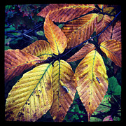 Fall Leaves Prints - Fall Leaves Print by Jeff Klingler