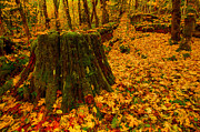 Fall Colors Autumn Colors Photo Posters - Fall Leaves Mosaic Poster by Dan Mihai