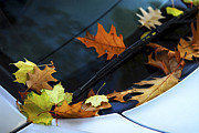 Oak Photos - Fall leaves on a car by Elena Elisseeva
