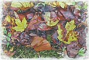 Autumn Scenes Mixed Media Framed Prints - Fall Leaves on the Ground Framed Print by Philip White