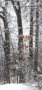 Gail Matthews - Fall Leaves on Winter Trees