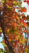 Fall Leaves Print by Scott Cameron