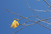 Bare Trees Mixed Media Metal Prints - Fall Leaves Study 2 Metal Print by Steve Ohlsen