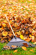 Fall Grass Posters - Fall leaves with rake Poster by Elena Elisseeva