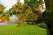 Turning Leaves Posters - Fall maple tree in foggy park Poster by Elena Elisseeva