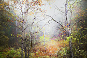 Fall Colours Posters - Fall Mist Poster by Theresa Tahara