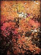 Leslie Hunziker - Fall on the Creek