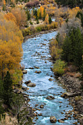 Gros Ventre Posters - Fall on the Gros Ventre River Poster by Angelique Rea