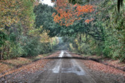 Fall On Witsell Rd. Print by Scott Hansen