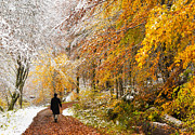 Winter Photos Prints - Fall or winter - autumn colors and snow in the forest Print by Matthias Hauser