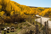 Fall Pasture On The Markagunt Plateau Print by Robert Ford